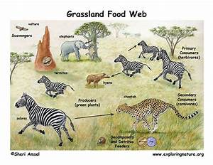 Grassland ecosystem and Energy flow through an ecosystem ...