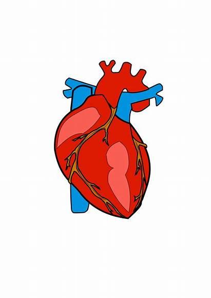 Clipart Heart Human Transparent Background Clip