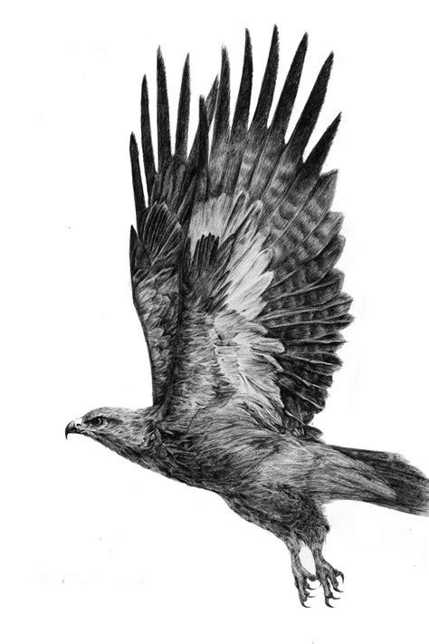 查看《动物圆珠笔画》原图,原图尺寸:5669x8504 | Hawk tattoo, Eagle tattoos