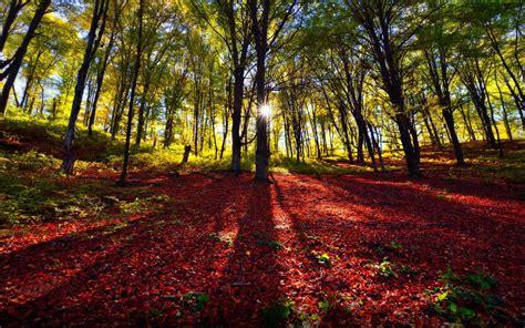 Sunrise Autumn Day Background Desktop Hd 2880x1800 ...