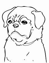 Coloring Dog Pages Dogs Puppy Pug Printable Print Beagle Colouring Breed Cute Pugs Puppies Cool Drawing Animals Cats Minecraft Clipart sketch template