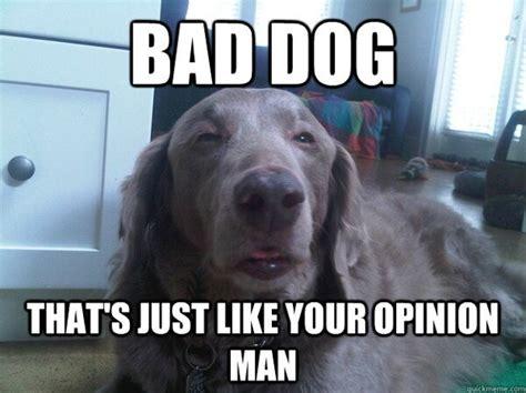 Bad Dog Meme - 10 dog meme 5 daily picks and flicks