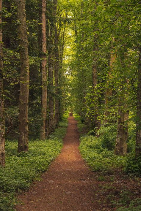 trail   trees nature  creative market