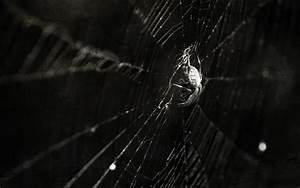 Spider Wallpaper and Background