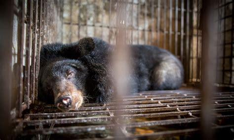 simulator exposes  horrific conditions bile bears