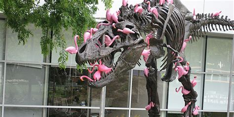 tyrannosaurus  attacked  flamingos  google campus