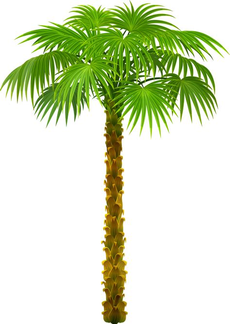 Clipart Palm Tree Palm Tree Clipart Tree Pencil And In Color Palm