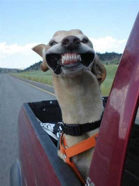 Dog Teeth Funny Com
