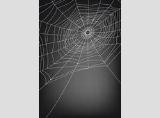 Spider web free vector download 4,701 Free vector for