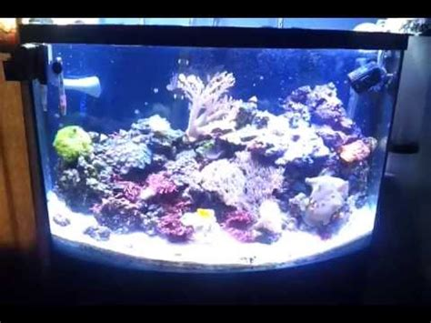 Cheap Led Lighting For A Reef Tank That Works Youtube
