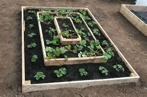 Teired Strawberry Bed