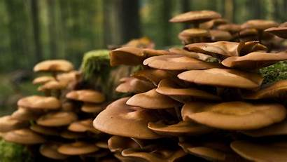 Spring Forests Mushrooms Nature Summer Allwallpaper