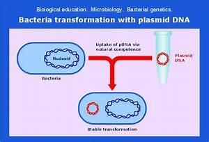 Microbiological Educational Diagram Sample  Bacteria