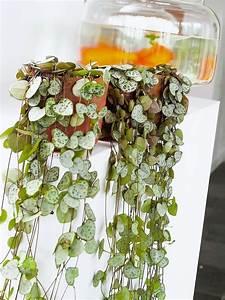 Zimmerpflanzen Für Dunkle Ecken : gr npflanzen im zimmer so werden sie in szene gesetzt ~ Michelbontemps.com Haus und Dekorationen