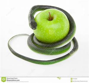 Snake Coiling Around An Apple On A White Royalty Free ...