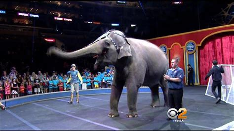 animal rights advocates protest  ringling bros