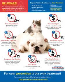 cat heartworm medicine does my or cat need heartworm prevention 1800petmeds 174