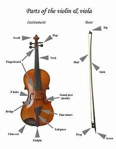 Parts Of The Violin  U0026 Viola