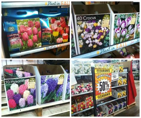 flower bulbs 50 at the home depot one