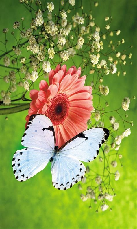 Butterfly Home Screen Wallpaper Images by 3d Butterfly Wallpaper Free Windows Phone App Market