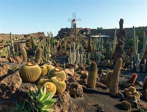 jardin de cactus cact lanzarote