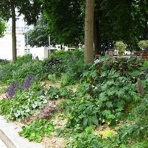 Plantes Vivaces Pour Massif : massifs massif ombre et lumiere en vente p pini re lepage ~ Premium-room.com Idées de Décoration