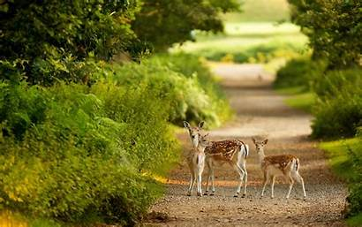 Nature Animal Forest Scenes