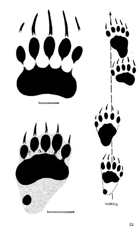 Free Bear Foot Print, Download Free Clip Art, Free Clip