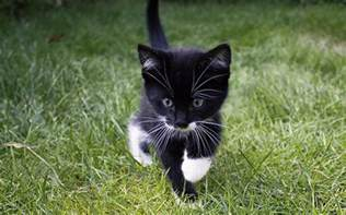 best names for black cats black and white cat names 250 cool kitty ideas