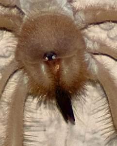Images Of Camel Spider Bites | www.pixshark.com - Images ...