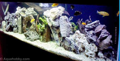 d 233 cor aquarium cichlid 233 s malawi esth 233 tique