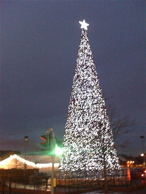 britains biggest christmas tree flickr photo sharing