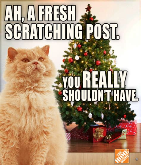 christmas lol holiday meme trees cats nails lol cats
