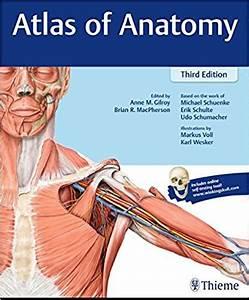 Anatomy 35