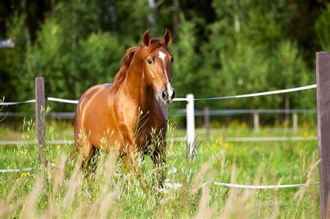 horse mustang horses running names nature riding runs today animals mostly endurance blood work