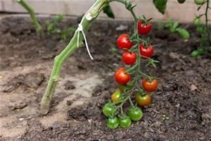 Tomaten Balkon Kübel : tomaten auf dem balkon anbauen ~ Yasmunasinghe.com Haus und Dekorationen