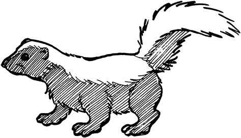 cute black  white skunk clipart   cliparts  images  clipground