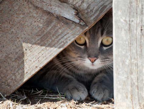angst und scheues verhalten bei katzen mit homoeopathie