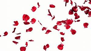 Falling Flower Petals Pictures to Pin on Pinterest - PinsDaddy