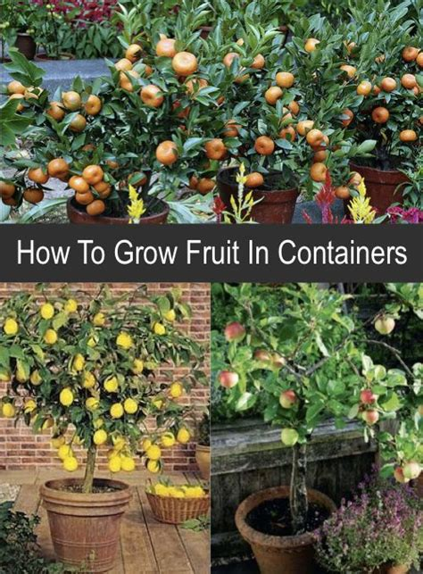 How To Grow Fruit In Containershttphomesteadand
