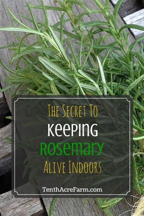 Ee  Best Ee    Indoor Flowering Plants Ideas On Pinterest