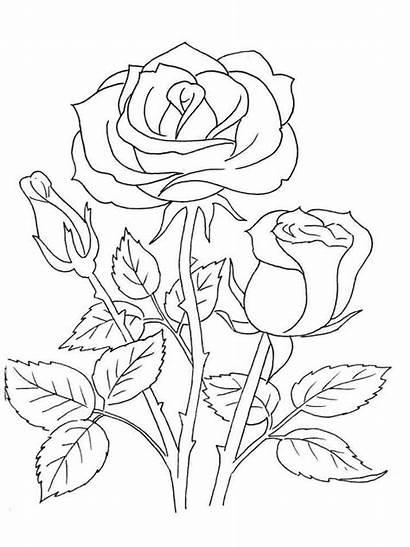 Coloring Rose Flower Flowers Drawing Patterns Rosen