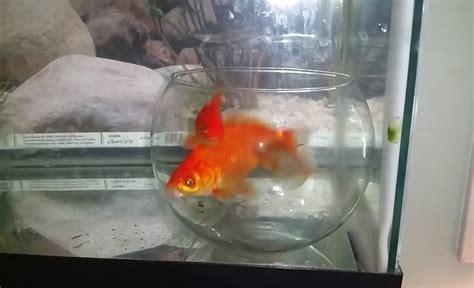 jeux de poissons dans un aquarium 28 images poisson dans un aquarium 28 images am 233