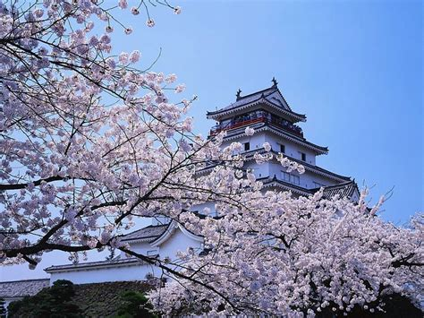 japanese scenery wallpaper professional beautiful