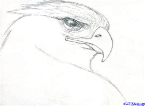 Cool Sketches To Draw Of Animals Learn How To Draw A