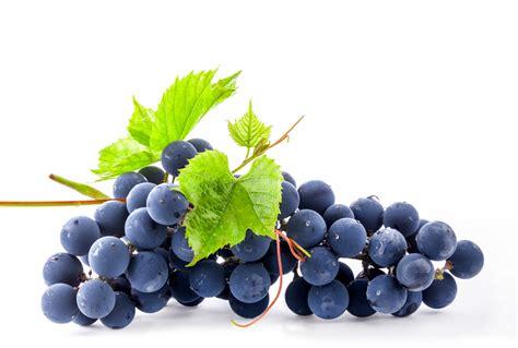 convertisseur de cuisine mangez du raisin noir maximag fr