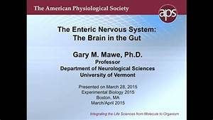 The Enteric Nervous System  The Brain In The Gut  2015