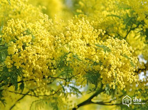chambre hote bormes les mimosas location bormes les mimosas dans une chambre d 39 hôte avec iha