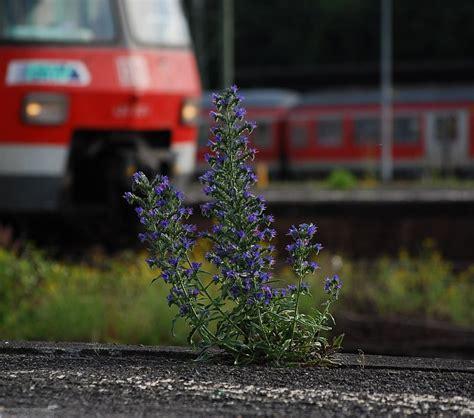 Botanischer Garten Wiesbaden by Wiesbaden Fotos Landschaftsfotos Eu