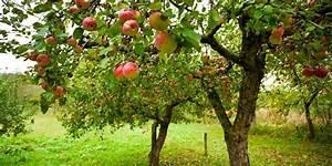 Apfelbaum Schneiden Wann : apfelbaum schneiden wann warum und wie bosch diy ~ A.2002-acura-tl-radio.info Haus und Dekorationen
